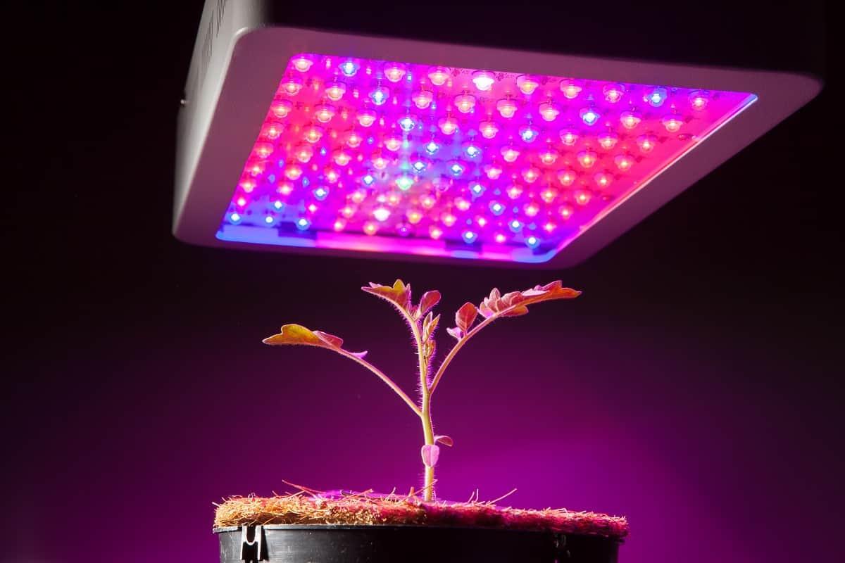 Should You Get Kind LED?